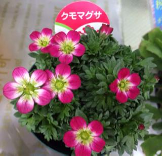 image-20140121165546.png